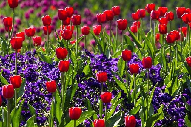 previna problemas e doenças oculares e oftalmológicas com a chegada da primavera