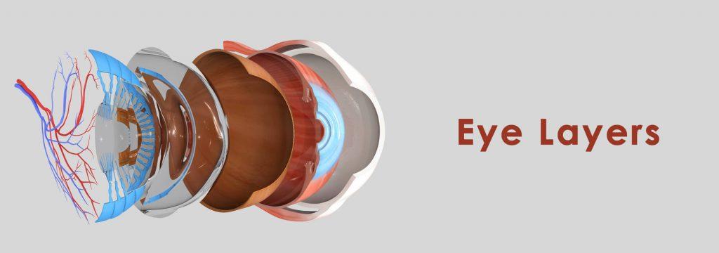 turdo sobre retina