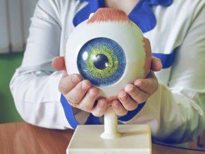 Oftalmologista segurando maquete de um olho